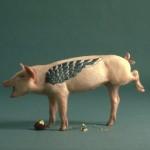 pig skin practice tattooing